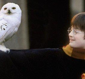 Ο Χάρι Πότερ πουλάει τον «Harry Potter»: Άνδρας με το ίδιο όνομα βάζει σε δημοπρασία σπάνια, πρώτη έκδοση του βιβλίου - μήπως την έχετε & εσείς; - Κυρίως Φωτογραφία - Gallery - Video
