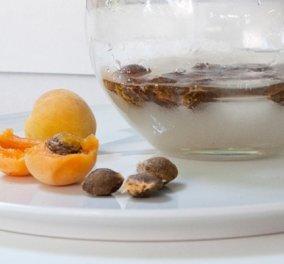 Η συνταγή του Στέλιου Παρλιάρου για το πιο ωραίο και εύκολο λικέρ - γίνεται με κουκούτσια από βερίκοκα  - Κυρίως Φωτογραφία - Gallery - Video