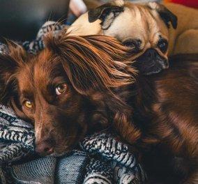 Ζώα συντροφιάς: Αλλάζουν όλα για κατοικίδια & αδέσποτα - τι προβλέπει ο νέος νόμος για την προστασία τους & τις υποχρεώσεις μας (βίντεο) - Κυρίως Φωτογραφία - Gallery - Video