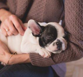 Μήπως χαϊδεύεις το σκύλο σου με λάθος τρόπο τόσο καιρό; - Δείξε προσοχή στη γλώσσα του σώματος - Κυρίως Φωτογραφία - Gallery - Video