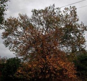 Καιρός: Φθινοπωρινό σκηνικό με συννεφιά και ασθενείς βροχές σήμερα Κυριακή - ανεβαίνει λίγο η θερμοκρασία - Κυρίως Φωτογραφία - Gallery - Video