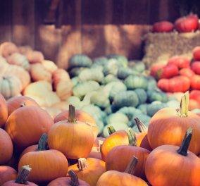 Κολοκύθα - η τροφή του Φθινοπώρου: Τα Διατροφικά της οφέλη & πως να την εντάξουμε στο διαιτολόγιό μας  - Κυρίως Φωτογραφία - Gallery - Video