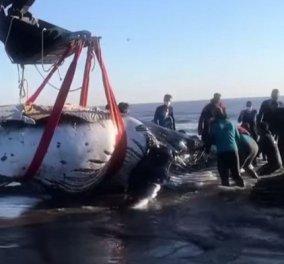 Η στιγμή που ειδικοί & εθελοντές διασώζουν φάλαινα μήκους 8,5 μέτρων και βάρους 7 τόνων - δείτε το εντυπωσιακό βίντεο - Κυρίως Φωτογραφία - Gallery - Video