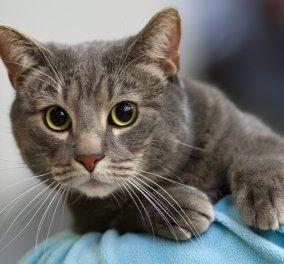 Απίστευτο Story of the day: Γάτα επέστρεψε σπίτι της μετά από 7 χρόνια απουσίας - Κυρίως Φωτογραφία - Gallery - Video