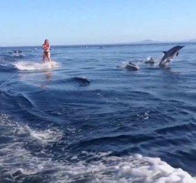 Εκπληκτικό βίντεο: Δελφίνια ακολουθούν σκιέρ & κάνουν άλματα δίπλα της με απόλυτη ακρίβεια - Κυρίως Φωτογραφία - Gallery - Video
