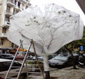 «Έντυσαν» τα δέντρα  και άπλωσαν την μπουγάδα τους στο κέντρο της  Θεσσαλονίκης οι φοιτητές της Σχολής Καλών Τεχνών ! - Κυρίως Φωτογραφία - Gallery - Video