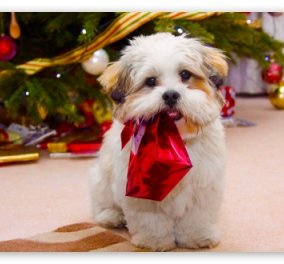 Smile: Τέλικα δε χαίρονται μόνο τα παιδιά όταν στολίζουμε χριστουγεννιάτικα δέντρα!Ιδού η απόδειξη! - Κυρίως Φωτογραφία - Gallery - Video