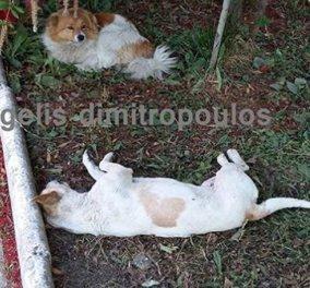 Μας ραγίζει την καρδιά ο σκύλος δίπλα στον νεκρό φίλο του: Σκότωσαν 10 αδέσποτα... - Κυρίως Φωτογραφία - Gallery - Video