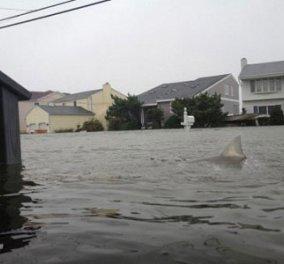 Ο τυφώνας Sandy έφερε καρχαρίες στις αυλές σπιτιών του New Jersey   - Κυρίως Φωτογραφία - Gallery - Video