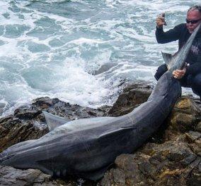 Νοτιοαφρικανός ψαράς ο πρώτος άνθρωπος στον κόσμο που καταδικάστηκε γιατί σκότωσε ένα τεράστιο λευκό καρχαρία ( φωτογραφίες) - Κυρίως Φωτογραφία - Gallery - Video