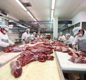 Συναγερμός σε όλη την Ευρώπη για το κρέας αλόγου - Κυρίως Φωτογραφία - Gallery - Video