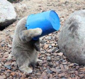 Καλή σας Κυριακή με ένα απολαυστικό αρκουδάκι και τα παιχνίδια του - Κυρίως Φωτογραφία - Gallery - Video