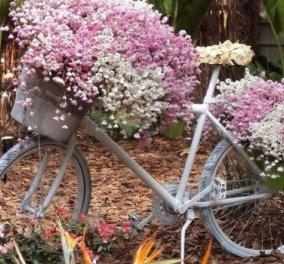 Μέχρι και τα ποδήλατα άνθισαν στην Κρήτη!! Αρκαλοχώρι με αρώματα και χρώματα της άνοιξης (φωτό) - Κυρίως Φωτογραφία - Gallery - Video