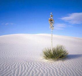Κάτασπρα τοπία στην έρημο - Πως θα ζήσετε σαν Λώρενς της Αραβίας (φωτογραφίες) - Κυρίως Φωτογραφία - Gallery - Video
