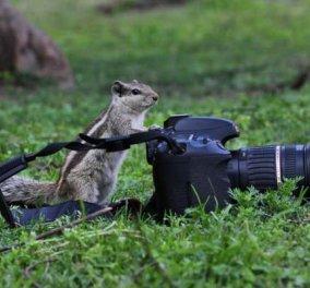 Η φωτογραφία της ημέρας - Σε ρόλο φωτογράφου ο συμπαθέστατος σκίουρος - Κυρίως Φωτογραφία - Gallery - Video