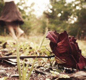 Ένα τριαντάφυλλο για την Κλυτώ σήμερα 9 Μαίου - Μία πολύ ωραία ιστορία του Χρήστου Χωμενίδη στο Protagon - Κυρίως Φωτογραφία - Gallery - Video
