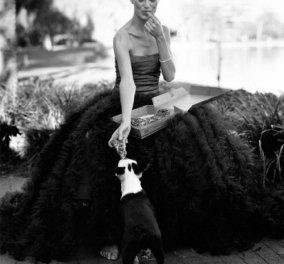 Σκυλάκια- εξώφυλλο στο Vanity Fair-περιποιημένα, ράτσας, όμορφα σπάνια και καλοί φίλοι! - Κυρίως Φωτογραφία - Gallery - Video