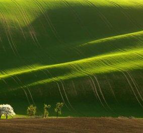 Καλημέρα στα καταπράσινα λιβάδια της φύσης με ελπίδα και αισιοδοξία για ότι φέρνει το 24ωρο! (φωτό) - Κυρίως Φωτογραφία - Gallery - Video
