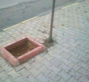 Ο παραλογισμός σε όλο του το μεγαλείο-Σε πεζοδρόμιο του Μεσολογγίου φύτεψαν δένδρο ακριβώς έξω από το παρτέρι!!! - Κυρίως Φωτογραφία - Gallery - Video