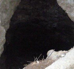 Χανιά: Έσωσαν μέσα από τον σύγχρονο Καιάδα τον σκελετωμένο σκύλο - Κυρίως Φωτογραφία - Gallery - Video