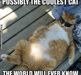 Απόγευμα καλοκαιριού και ο γάτος μου έβαλε τα γυαλιά ηλίου του - Κυρίως Φωτογραφία - Gallery - Video