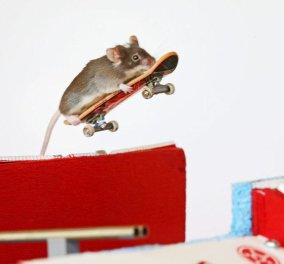 Smile: ένα αξιαγάπητο ποντικάκι μαθαίνει… σκέιτμπορντ και μας δείχνει πως! (φωτό & βίντεο) - Κυρίως Φωτογραφία - Gallery - Video