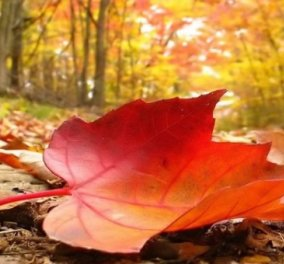 4 απλές ασχολίες για να κάψετε θερμίδες το φθινόπωρο - Κυρίως Φωτογραφία - Gallery - Video