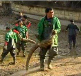Μετέφεραν 8.000 αλιγάτορες με τα χέρια τους εργάτες σε εσωτερικές δεξαμενές στην Κίνα για να αποφύγουν το κρύο! (βίντεο) - Κυρίως Φωτογραφία - Gallery - Video