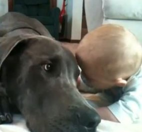 Το βίντεο της ημέρας: Ένας τεράστιος σκύλος αγκαλιάζεται με ένα μωράκι! - Κυρίως Φωτογραφία - Gallery - Video