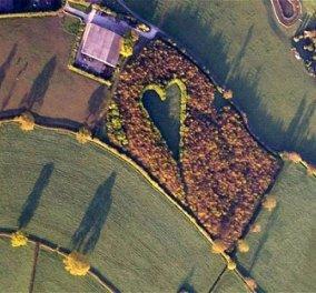 Ένα δάσος-καρδιά για τη γυναίκα του που δεν ζει πια - Κυρίως Φωτογραφία - Gallery - Video