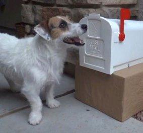 Τέτοιο σκύλο, σας υπόσχομαι, δεν έχετε ξαναδεί στη ζωή σας! - Κυρίως Φωτογραφία - Gallery - Video