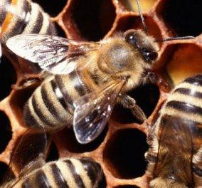 Έχει πλάκα... η είδηση: ''Γαλλίδες'' μέλισσες παρήγαγαν μπλε και πράσινο μέλι, γιατί; - Κυρίως Φωτογραφία - Gallery - Video