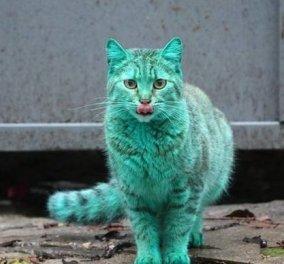 Αυτή τη γάτα, τη πράσινη, από τη Βουλγαρία, την είδατε τελικά;(Φωτό) - Κυρίως Φωτογραφία - Gallery - Video