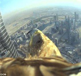 Πετάμε για Ντουμπάι: Τοποθέτησαν κάμερα στη ράχη αετού & ιδού το αποτέλεσμα! (Slideshow) - Κυρίως Φωτογραφία - Gallery - Video