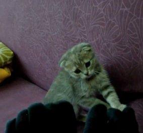 Το smile βίντεο της ημέρας: Γάτες VS κάλτσες σε μια αέναη ξεκαρδιστική μάχη - Κυρίως Φωτογραφία - Gallery - Video