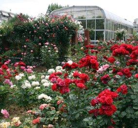 Story of the day: Αυτός είναι ο «άγνωστος» Βοτανικός κήπος της Θεσσαλονίκης - Μια όαση με 150 ποικιλίες τριαντάφυλλων, τεχνητές λίμνες & καταρράκτες - Κυρίως Φωτογραφία - Gallery - Video