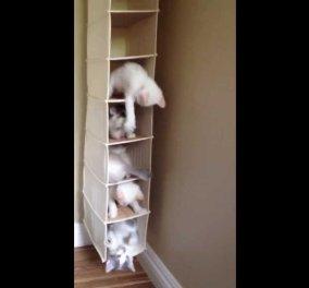 Smile βίντεο: Γλυκούλικες γατούλες παίζουν χαρούμενες μέσα σε μια.. παπουτσοθήκη - Κυρίως Φωτογραφία - Gallery - Video