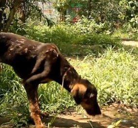 Dog Story of the day: Mια συγκινητική διάσωση καρέ καρέ ενός σκύλου που έπεσε σε ζεστή πίσσα & φαινόταν ότι θα πέθαινε αλλά.... (φωτό - βίντεο)  - Κυρίως Φωτογραφία - Gallery - Video