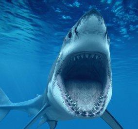 """Θρίλερ με  ψαρά που δέχθηκε επίθεση από καρχαρία - Γεμάτη δηλητηριώδη φίδια η πλησιέστερη ακτή που την έλεγαν """"Παραδεισένια""""!  - Κυρίως Φωτογραφία - Gallery - Video"""