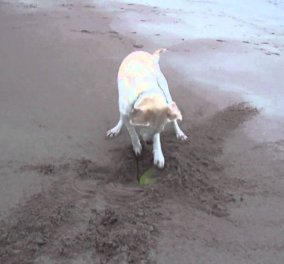 Smile: Δείτε αυτό το απεγνωσμένο σκυλάκι να προσπαθεί να πιάσει το frisbee του!(Βίντεο) - Κυρίως Φωτογραφία - Gallery - Video