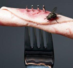 Βίντεο - αποκάλυψη: Δείτε τι γίνεται όταν κάθεται μια μύγα στο φαγητό σας - Κυρίως Φωτογραφία - Gallery - Video