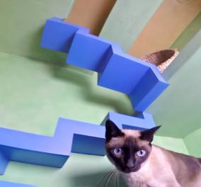 Ο Πίτερ Κοέν λατρεύει τις γάτες τόσο ώστε μετέτρεψε το σπίτι του στην Καλιφόρνια στον απόλυτο γατο-παιχνιδότοπο! (βίντεο) - Κυρίως Φωτογραφία - Gallery - Video