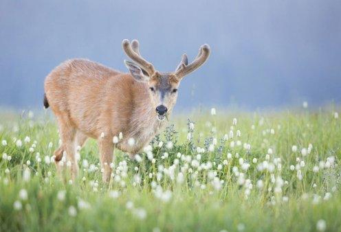 50 συναρπαστικές εικόνες με άγρια ζώα και πουλιά από τα Εθνικά Πάρκα της Αμερικής - Κυρίως Φωτογραφία - Gallery - Video