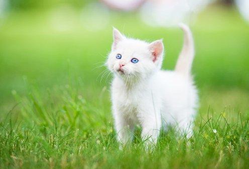 Αφήνεις τη γάτα σου ελεύθερη έξω; Αυτά είναι τα υπέρ και τα κατά  - Κυρίως Φωτογραφία - Gallery - Video