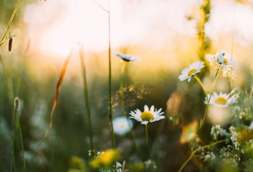 Κατερίνα Γλύμπη: Ημερήσιες προβλέψεις για όλα τα ζώδια από την αγαπημένη αστρολόγο  - Κυρίως Φωτογραφία - Gallery - Video