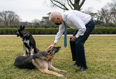 Εκτός Λευκού Οίκου τα λυκόσκυλα του Μπάιντεν: Η επιθετική συμπεριφορά στο προσωπικό & το δάγκωμα σε αστυνομικό (φωτό & βίντεο) - Κυρίως Φωτογραφία - Gallery - Video