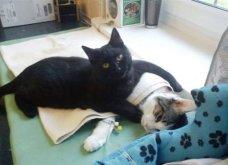 Cat story: Η μαύρη γάτα που ξεγέλασε τον Χάρο και έγινε νοσοκόμα...  - Κυρίως Φωτογραφία - Gallery - Video