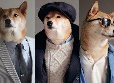 Μαθήματα μόδας από... σκύλους ντυμένους σαν gentlemen με στυλ & ύφος ανάλογο! - Κυρίως Φωτογραφία - Gallery - Video