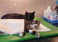 Cat story: Η μαύρη γάτα που ξεγέλασε τον Χάρο και έγινε νοσοκόμα...  - Κυρίως Φωτογραφία - Gallery - Video 2