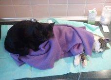 Cat story: Η μαύρη γάτα που ξεγέλασε τον Χάρο και έγινε νοσοκόμα...  - Κυρίως Φωτογραφία - Gallery - Video 3